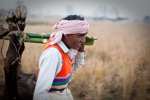 Gadhimai chamar dalit